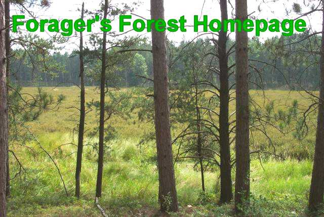 Forager's Forest Homepage